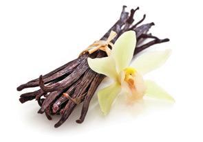 vanilija, vanilja, strok vanilje, strok vanilije